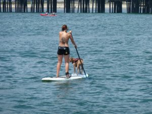 Paddle Boarding (not in Granton, but why not?) - Photo by H Sillitto