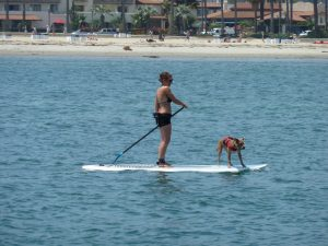 The joys of paddle boarding... photo H Sillitto
